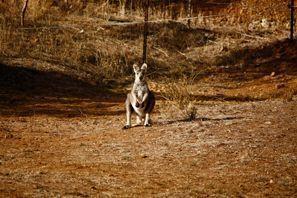 Leie bil Tamworth, Australia