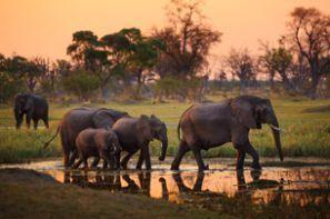Leiebil Botswana