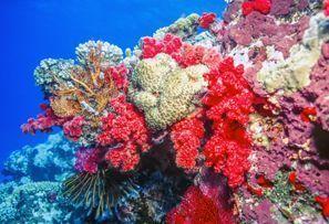 Leie bil Coral Coast, Fiji