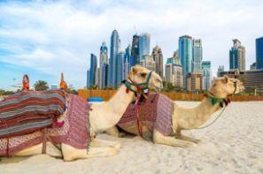 Leiebil Forente Arabiske Emirater