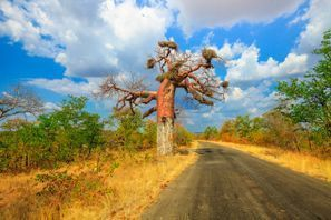 Leie bil Makhado, Sør Afrika